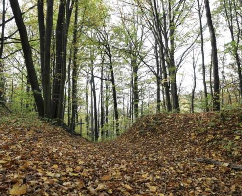 Wanderweg zum Waldhaus Kalkbrüche