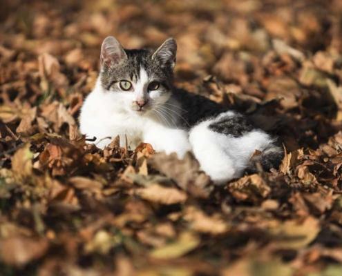 Katze am Waldhaus Kalkbrüche